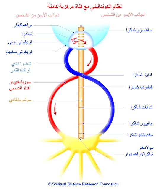 2-arabic-kundalini-dormant