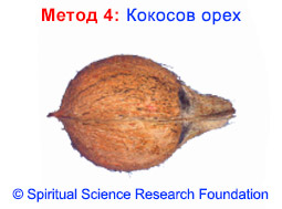 4-BG-Coconut