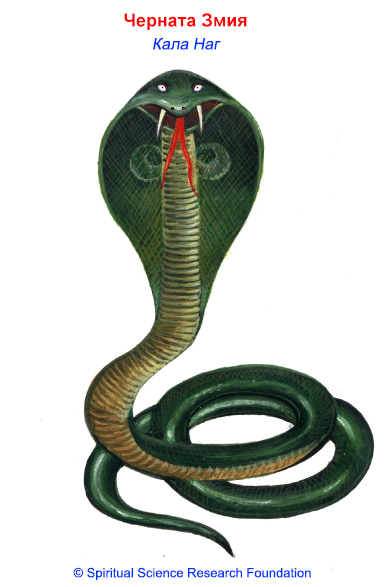 BG_(S)_The Black Serpent