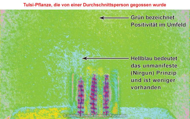 Biofeedback-Vergleichsstudie über von S. H. Dr. Athavale bewässertes Heiliges Basilikum