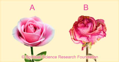 Den sechsten Sinn testen − Rosen