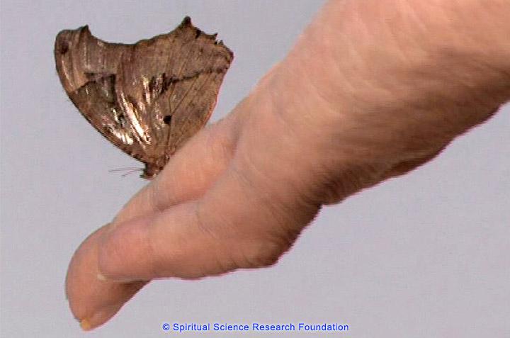 Fliegen und insekten sterben im spirituellen forschungszentrum for Fliegen in blumenerde vernichten