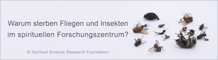 Fliegen und Insekten sterben im spirituellen Forschungszentrum