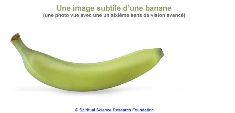 FR-Banana01
