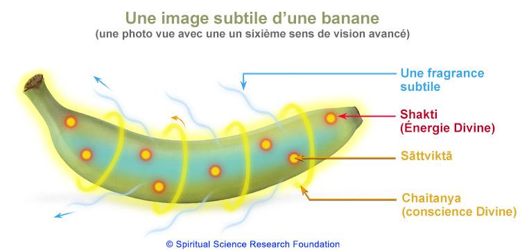 FR-Banana02
