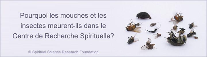 Pourquoi les mouches et les insectes meurent ils dans le - Invasion de mouches pourquoi ...