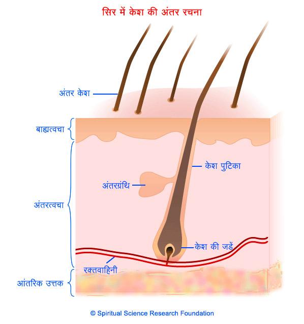 3-HIN_Hair-Normal