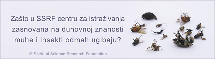 1-CRO_-Why-do-flies-and-insects-die-in-the-Spiritual-Research-Centre-picture