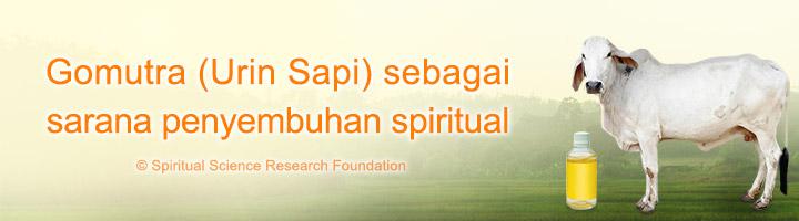Gomutra (Urin Sapi) sebagai sarana penyembuhan spiritual