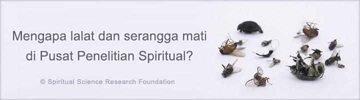 Mengapa lalat dan serangga mati di Pusat Penelitian Spiritual?