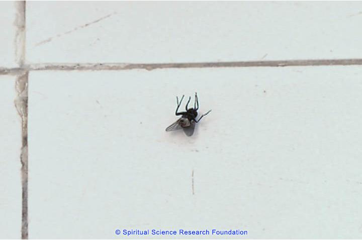 Perché muoiono gli insetti nel Centro di Ricerca Spirituale?