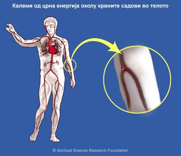 MKD_Circulatory-black