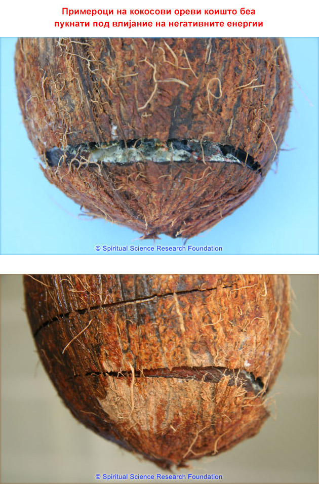 2-mkd_coconuts-cracked-by-negative-energies