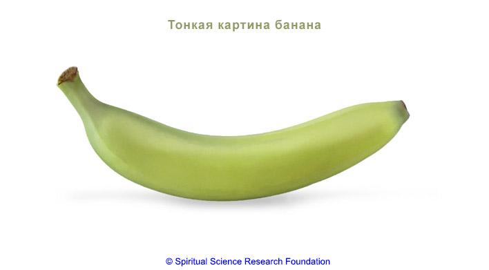 5_RUSS_-Vegetarian-vs-Non-Vegetarian-Diet