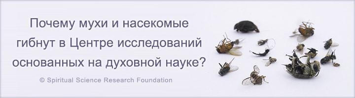 Почему мухи и насекомые гибнут в Центре исследований основанных на духовной науке?
