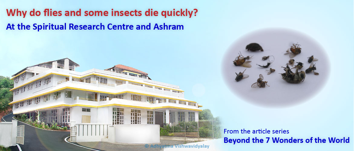 How To Get Rid Of Flies A Possible Spiritual Solution Spiritual