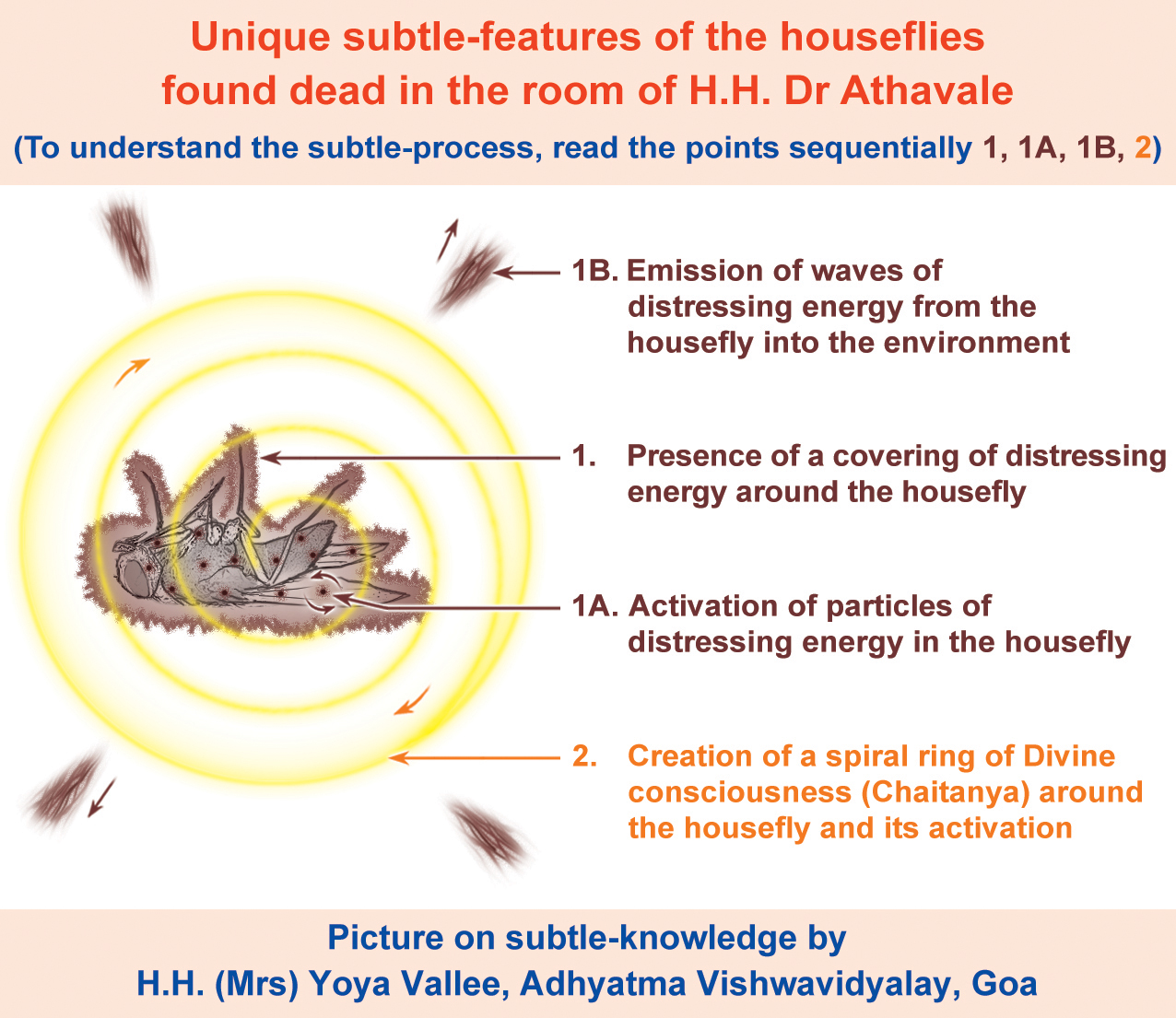 Houseflies found dead in the room of H.H. Dr Athavale