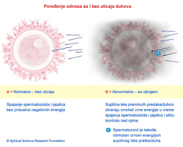 2-SERB_pregnancy