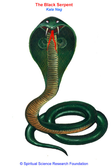 Black Serpent (Kaala Naag)