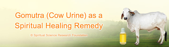 Gomutra (Cow Urine) as a Spiritual Healing Remedy