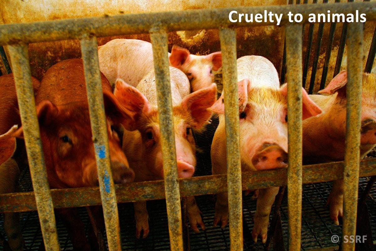Cruelty-to-animals