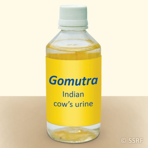 Gomutra - Indian cow's urine