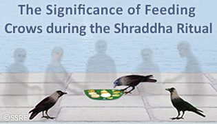 The Significance of Feeding Crows during the Shraddha Ritual