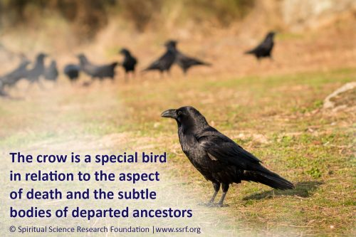 The crow, departed ancestors, pitrupaksh and shraddha