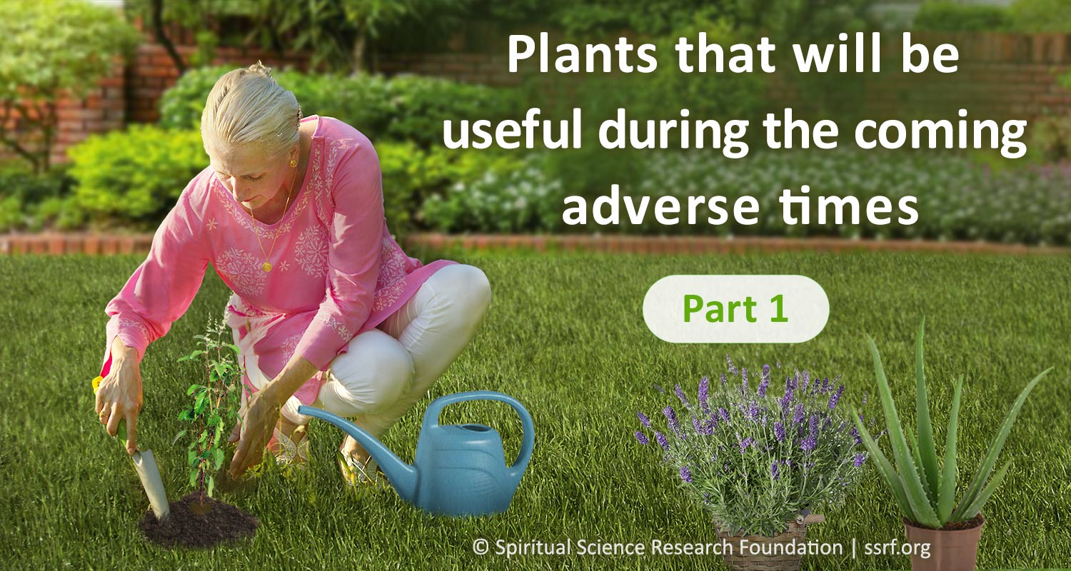 Medicinal plants and herbs Adverse times