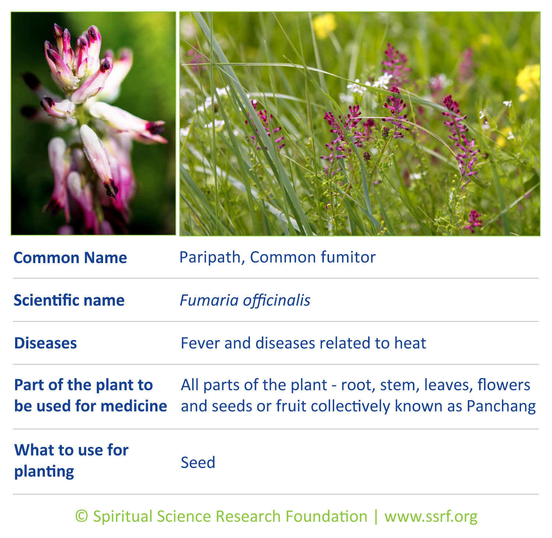 Small-plants-7-Paripath