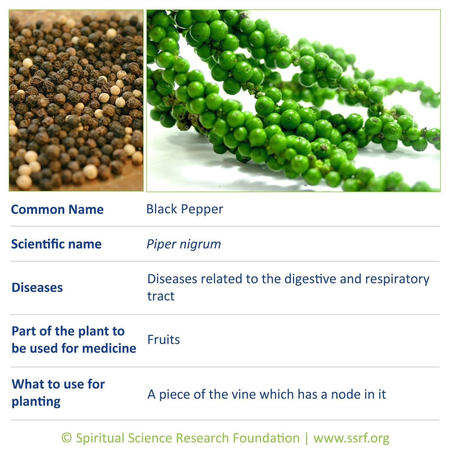Vines-6-Black-Pepper