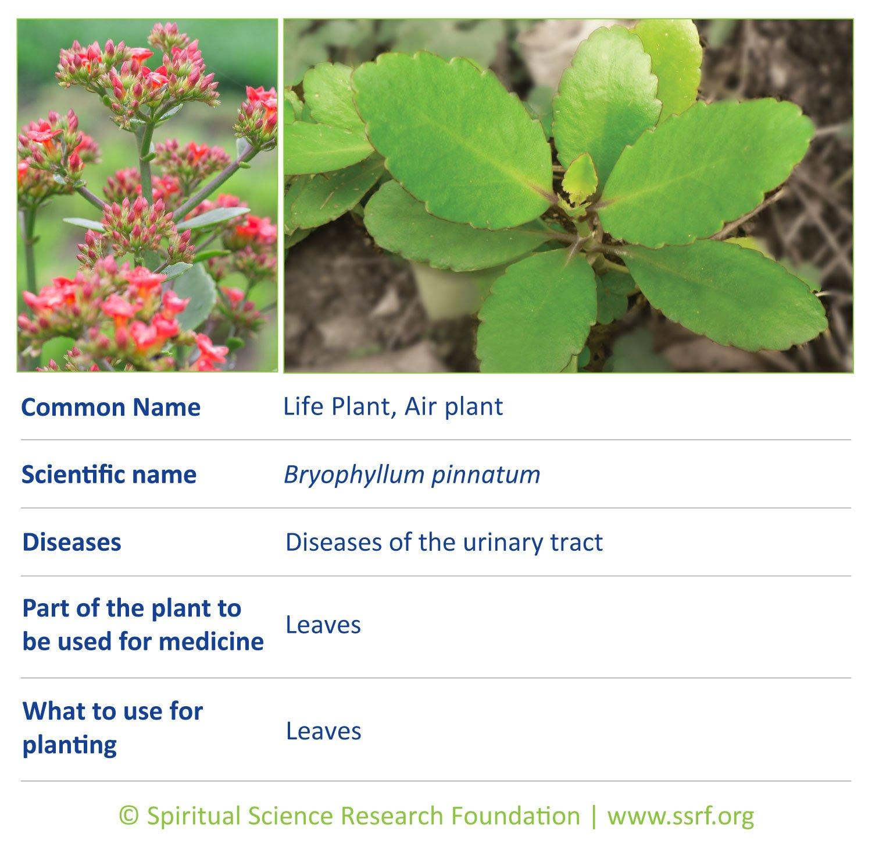 herbs-16-Life-Plant