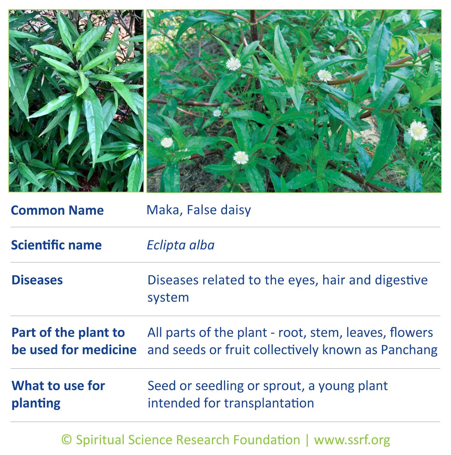 herbs-8-maka