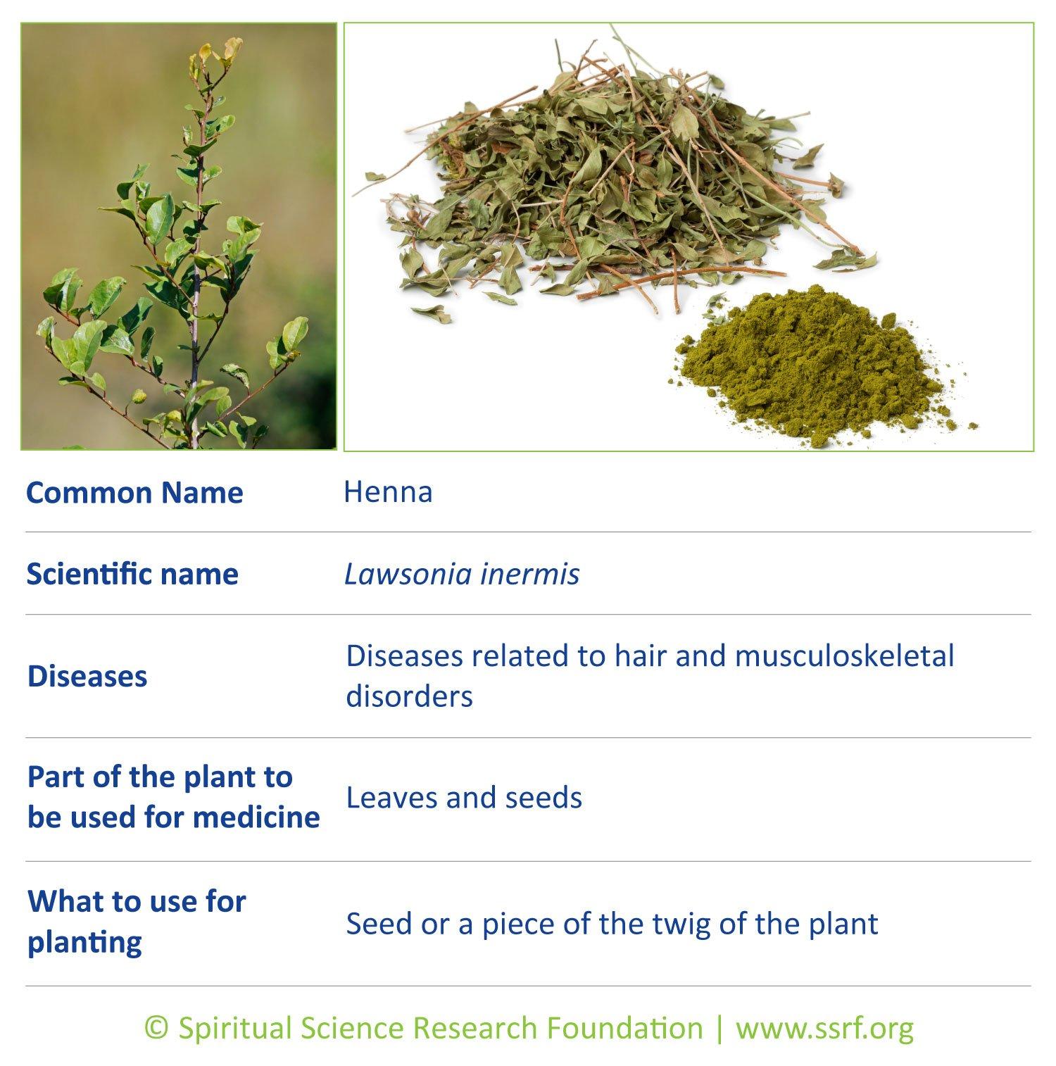 shrubs-3-Henna
