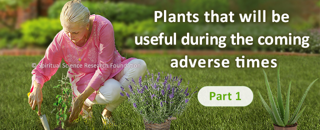 Plants that will be useful during the coming adverse times