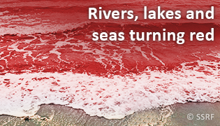 Rivers, lakes and seas turning red