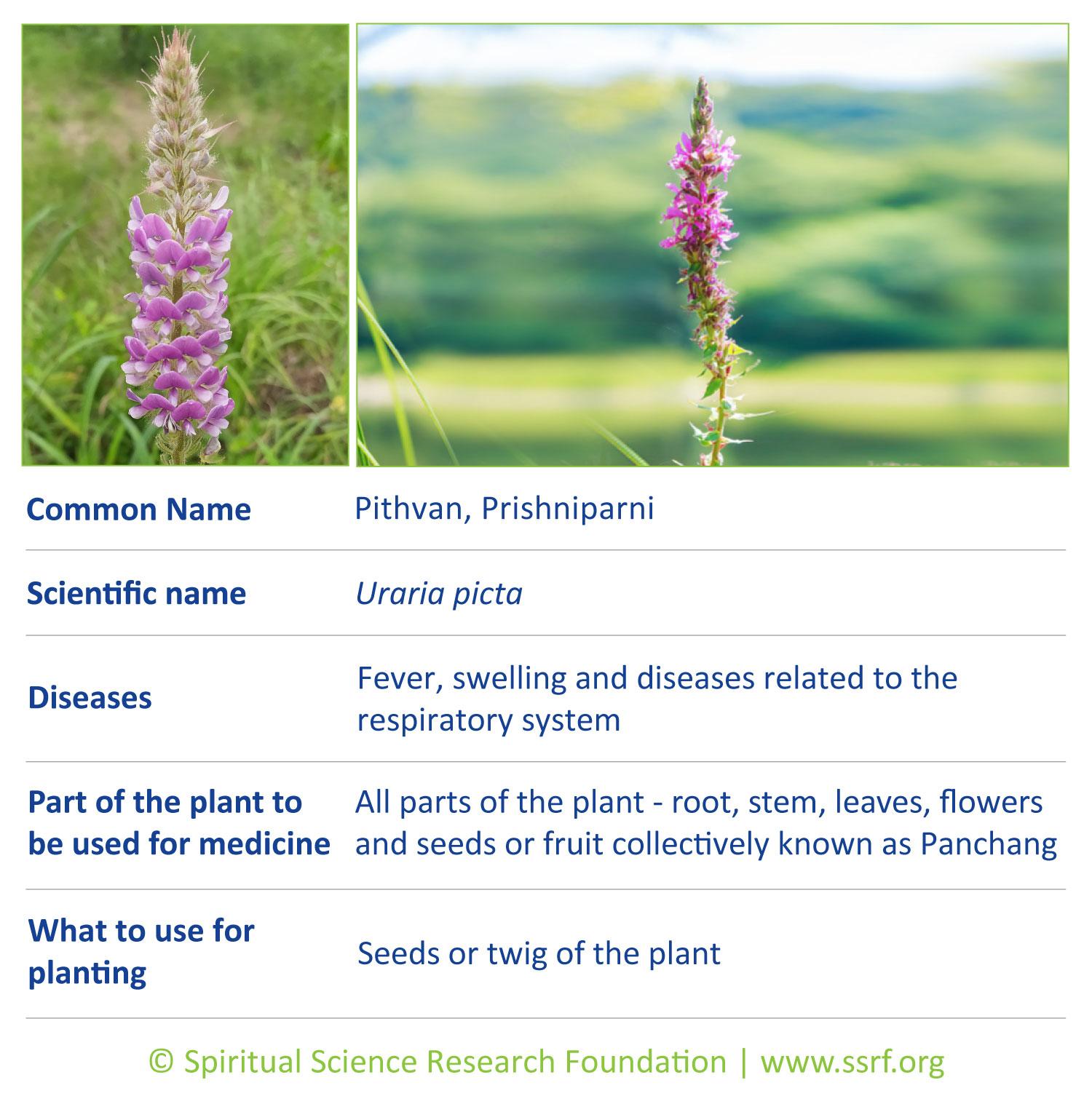 Small-plants-8-Pithvan