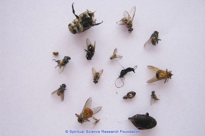 Various flies and insects that have died in the room of His Holiness Dr Athavale