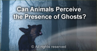 animals can perceive ghosts