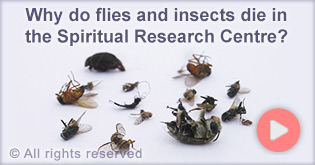Flies-dying-in-ssrf-centre-video2