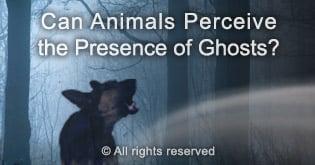 sixth sense in animals