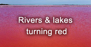 Rivers and lakes turning red