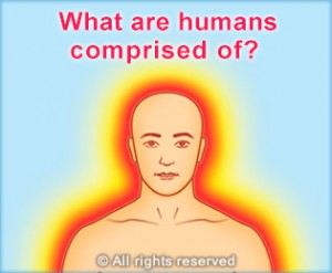 what are humans comprised of